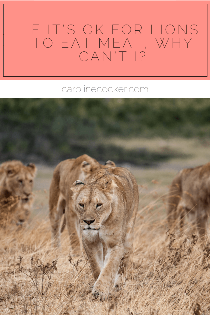 lions eat meat