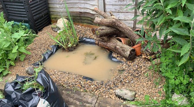 photo of a newly-dug wildlife pond